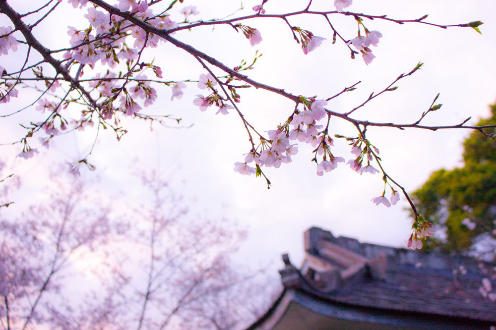 festival printemps